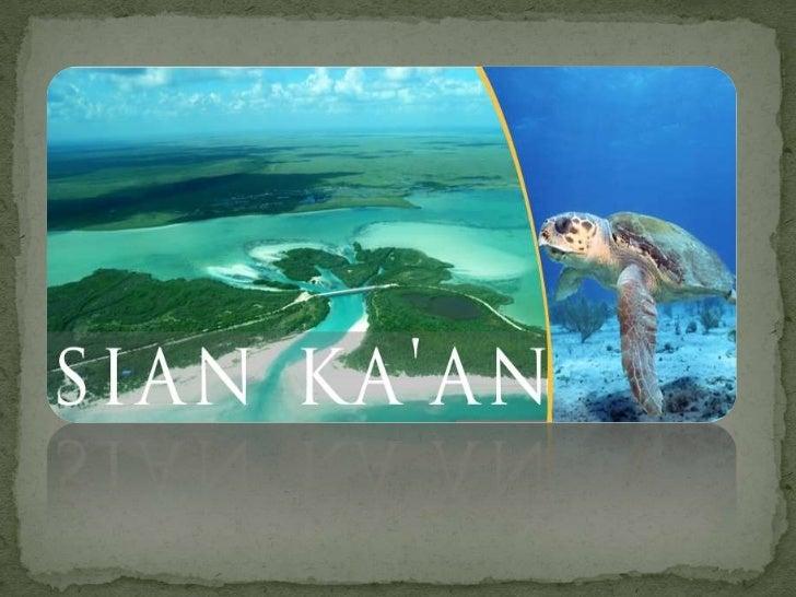 """ Traducido del Maya """"Donde nace el cielo"""" o """"Regalo del cielo"""". Reserva ecológica En 1987 la reserva fue declarada por ..."""