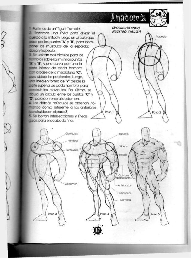 Asombroso Cómo Dibujar La Anatomía Corporal Bandera - Anatomía de ...