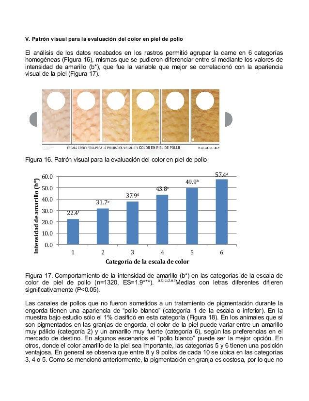 Patrones fotográficos para la evaluación del color en piel y en carne…