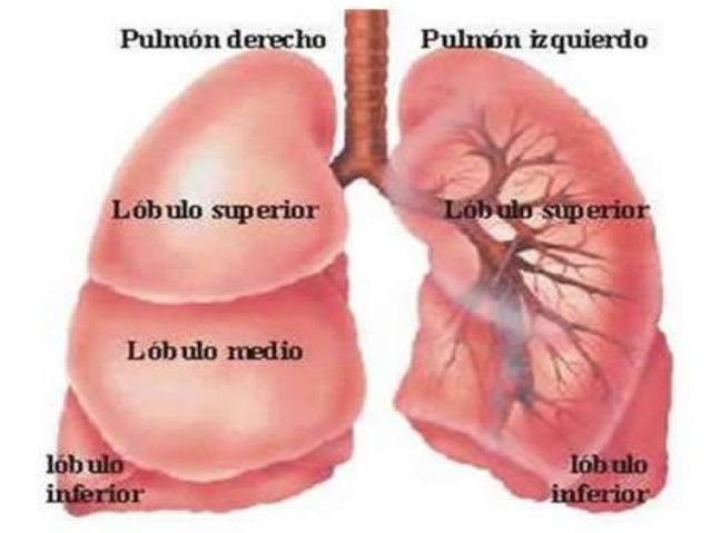 Sistema Respiratorio. Patrón Normal:  Inspección: Expansibilidad torácica normal. No tiraje.  Palpación: Se comprueba la...