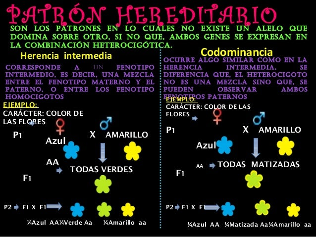 PATRÓN HEREDITARIO son los patrones en lo cuales no existe un alelo que domina sobre otro, si no que, ambos genes se expre...