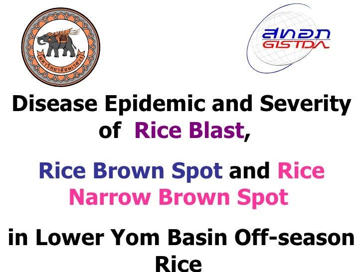 Disease Epidemic and Severity of  Rice Blast ,  Rice Brown Spot  and  Rice Narrow Brown Spot   in Lower Yom Basin Off-seas...