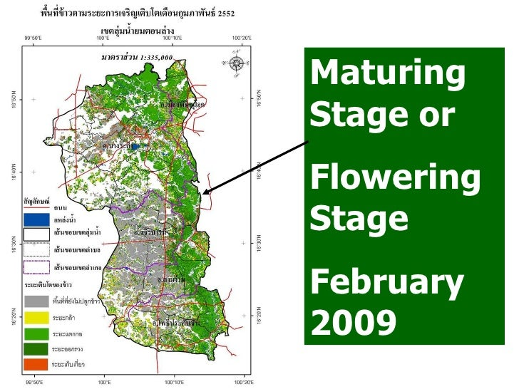 Maturing Stage or Flowering Stage February 2009