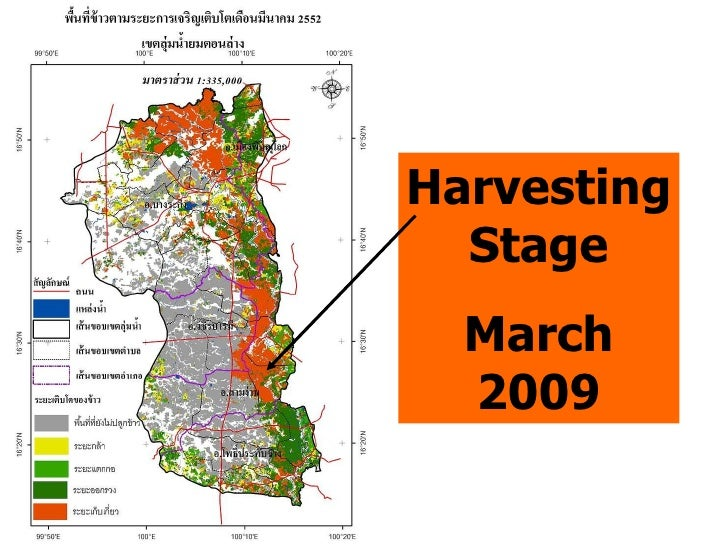 Harvesting Stage March 2009