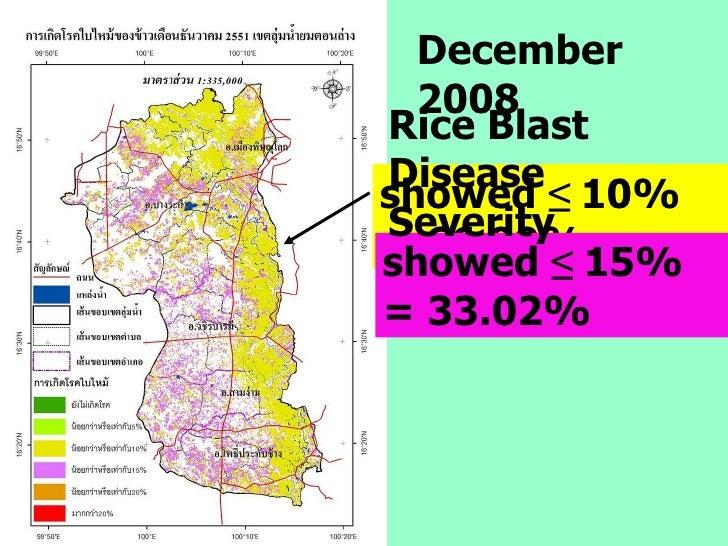 showed  ≤  10% = 66.99% December 2008 showed  ≤  15% = 33.02% Rice Blast Disease Severity