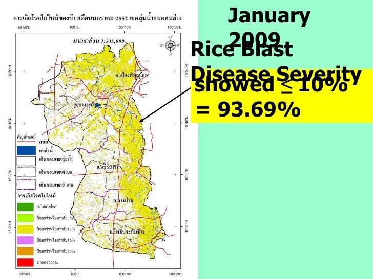 January 2009 showed  ≤  10%   = 93.69% Rice Blast Disease Severity