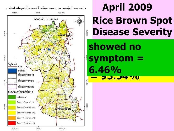 April 2009 showed ≤ 10% = 95.54%  showed no symptom   = 6.46% Rice Brown Spot Disease Severity