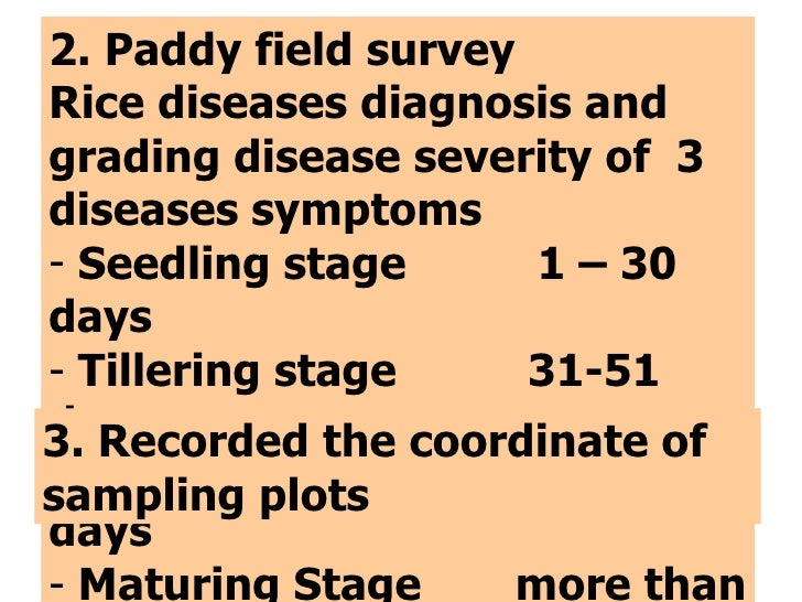 <ul><li>2. Paddy field survey </li></ul><ul><li>Rice diseases diagnosis and grading disease severity of  3 diseases   symp...