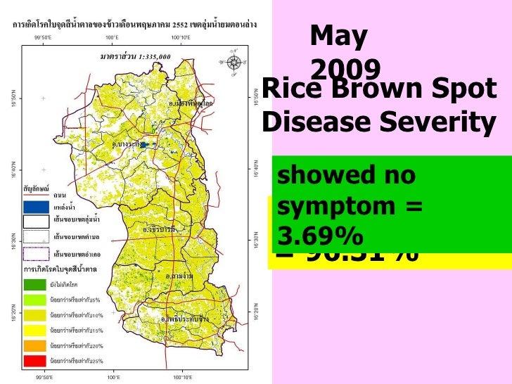 May  2009 Rice Brown Spot Disease Severity showed ≤ 10% = 96.31%  showed no symptom   = 3.69%