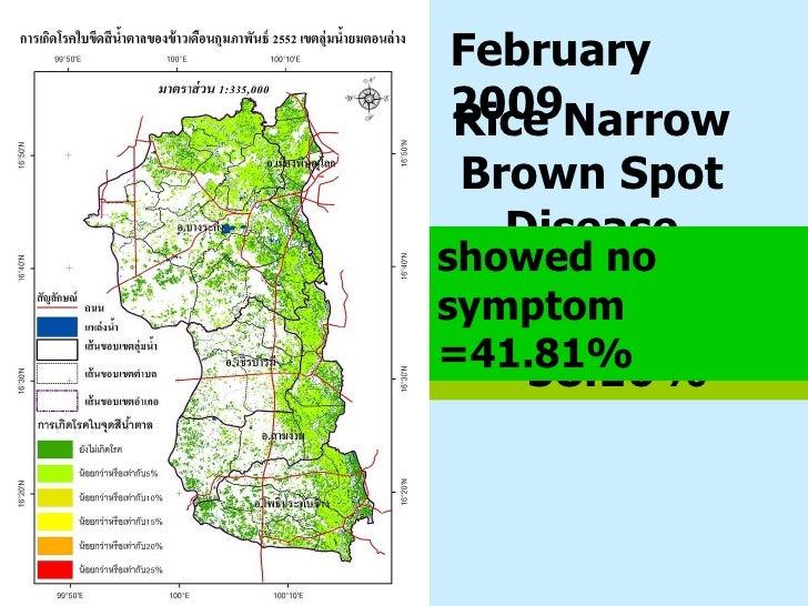 Rice Narrow Brown Spot   Disease Severity showed  ≤  5%  =  58.16% February 2009 showed no symptom =41.81%