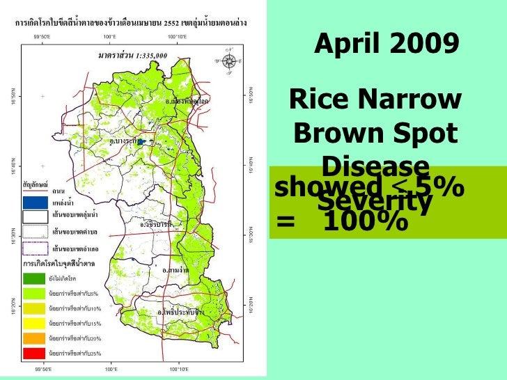showed  ≤  5%  =  100%  April 2009 Rice Narrow Brown Spot   Disease Severity