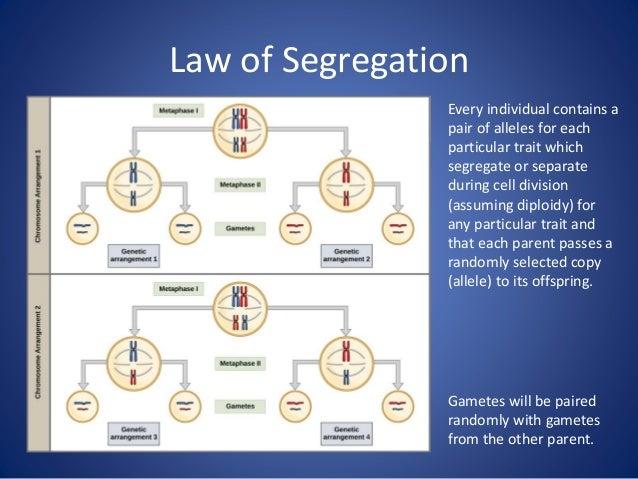 Example 1. P generation 2. F1 generation 3. F2 generation