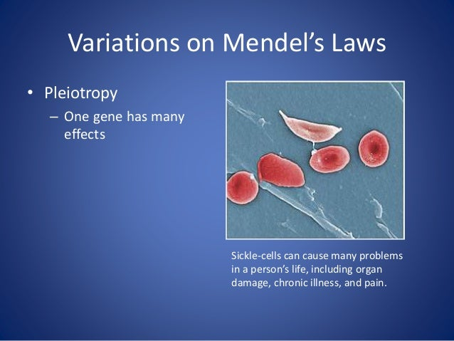 Variations on Mendel's Laws Polygenic Inheritance—Many genes control one phenotype Read more here: http://www.plosbiology....