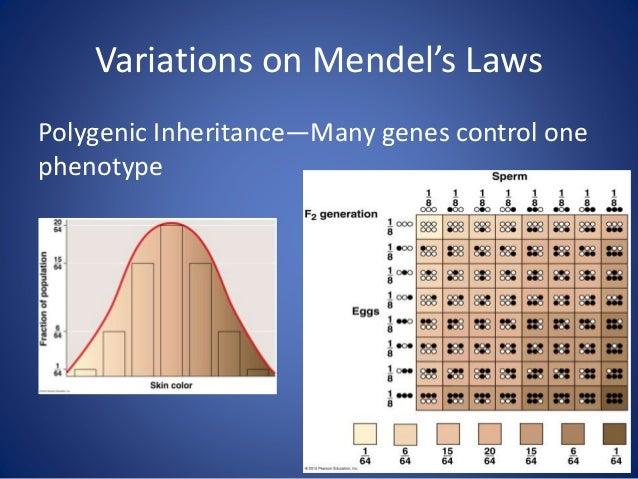 Sex Linked Genes • Sex Determination – Female – XX – Male - XY