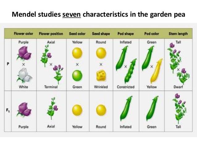 mendel laws of heredity three laws pdf