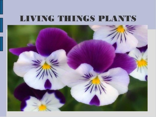 LIVING THINGS PLANTS Título