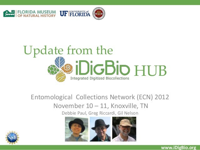 www.iDigBio.org Update from the Entomological Collections Network (ECN) 2012 November 10 – 11, Knoxville, TN Debbie Paul, ...