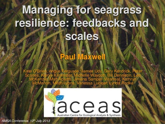 Managing for seagrass resilience: feedbacks and scales Paul Maxwell Kate O'Brien, Angus Ferguson, James Udy, Gary Kendrick...