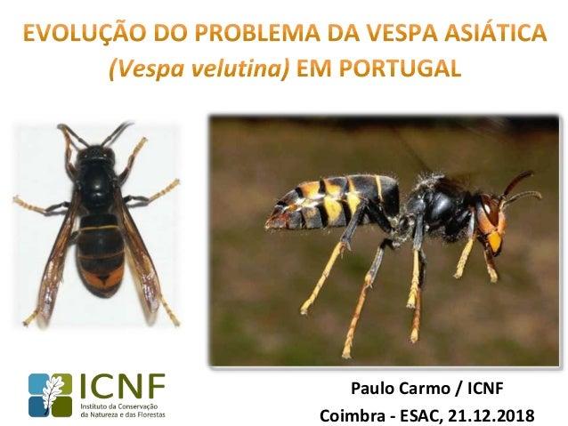 Paulo Carmo / ICNF Coimbra - ESAC, 21.12.2018