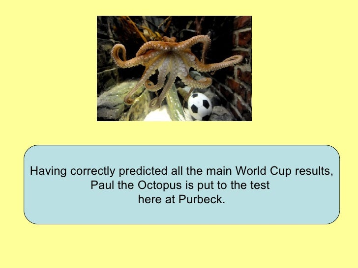 Having correctly predicted all the main World Cup results, Paul the Octopus is put to the test  here at Purbeck.