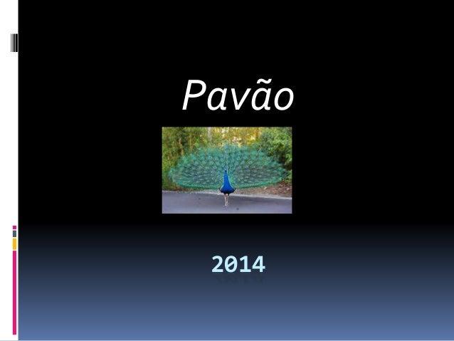 Pavão 2014