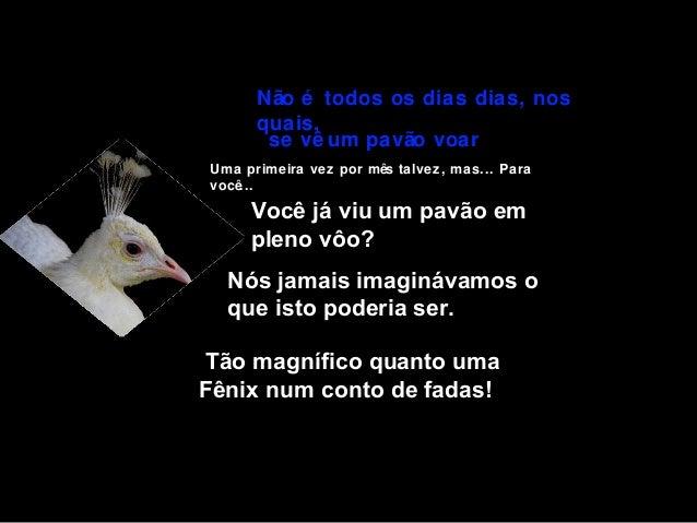 Não é todos os dias dias, nos quais, se vê um pavão voar Uma primeira vez por mês talvez, mas... Para você...  Você já viu...