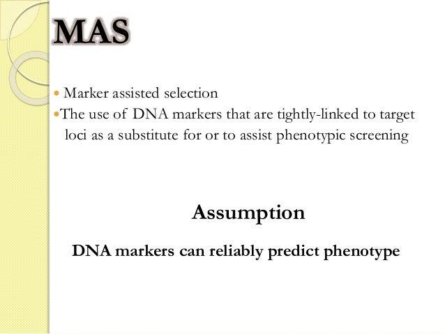 Marker Assisted Selection in Crop Breeding Slide 2