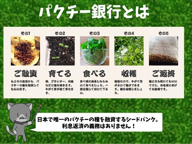 日本で唯一のパクチーの種を融資するシードバンク。 利息返済の義務はありません! パクチー銀行とは
