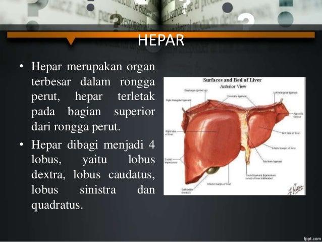 Modul Sistem Respirasi TB Paru