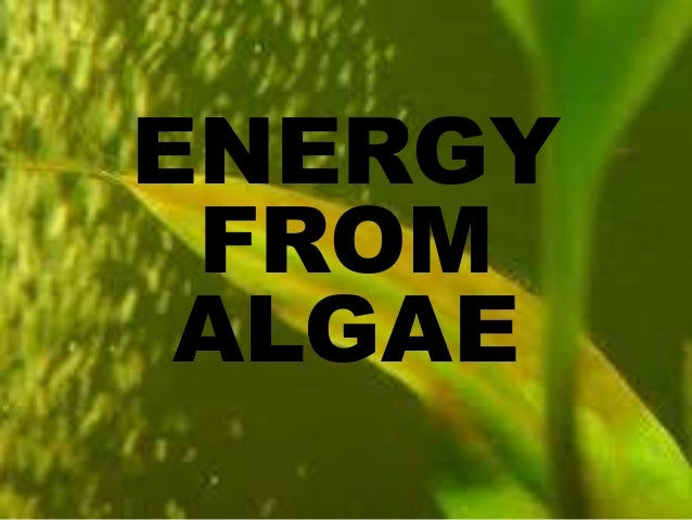 ENERGY FROM ALGAE