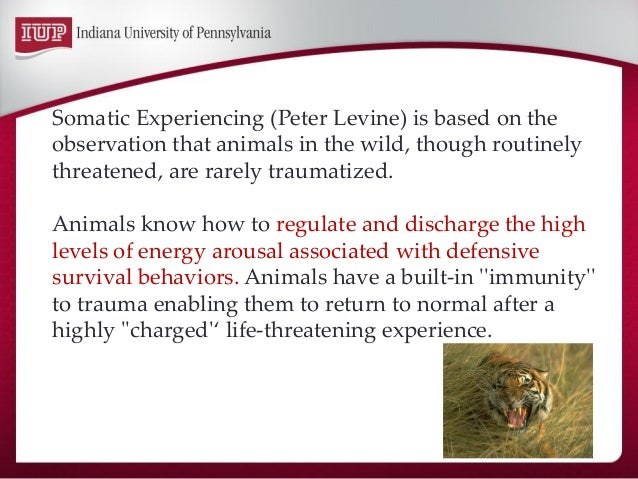 Somatic Experiencing (Peter Levine) is based on the observation that animals in the wild, though routinely threatened, are...