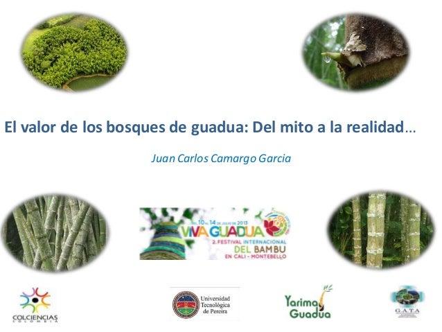 El valor de los bosques de guadua: Del mito a la realidad… Juan Carlos Camargo Garcia