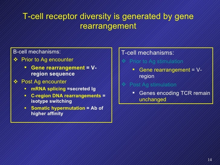 T-cell receptor diversity is generated by gene rearrangement <ul><li>B-cell mechanisms: </li></ul><ul><li>Prior to Ag enco...