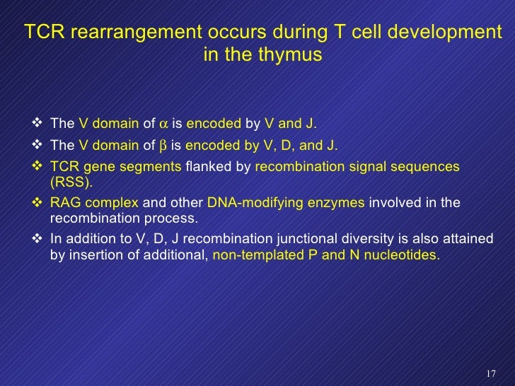 TCR rearrangement occurs during T cell development in the thymus <ul><li>The  V domain  of    is  encoded  by  V and J. <...