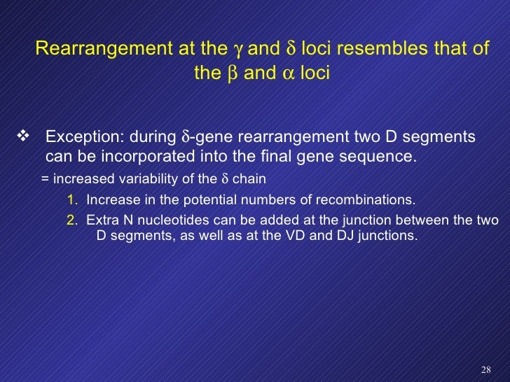 Rearrangement at the    and    loci resembles that of the    and    loci <ul><li>Exception: during   -gene rearrangem...