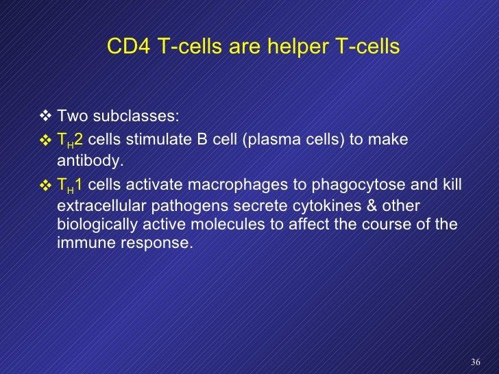 CD4 T-cells are helper T-cells <ul><li>Two subclasses:  </li></ul><ul><li>T H 2  cells stimulate B cell (plasma cells) to ...