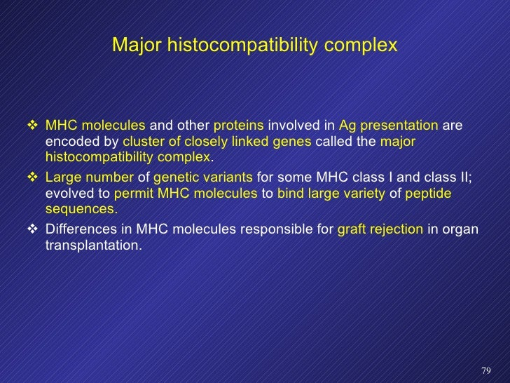 Major histocompatibility complex <ul><li>MHC molecules  and other  proteins  involved in  Ag presentation  are encoded by ...