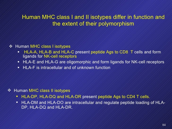 Human MHC class I and II isotypes differ in function and the extent of their polymorphism <ul><li>Human  MHC class I isoty...