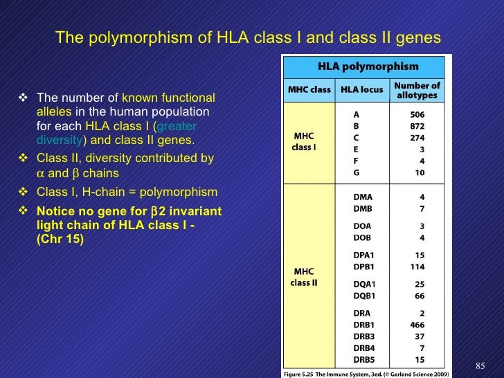 The polymorphism of HLA class I and class II genes <ul><li>The number of  known functional alleles  in the human populatio...