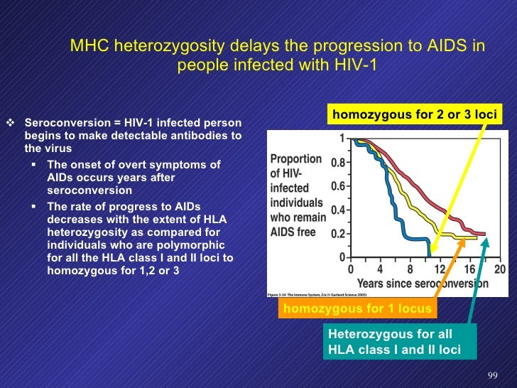 MHC heterozygosity delays the progression to AIDS in people infected with HIV-1 <ul><li>Seroconversion = HIV-1 infected pe...