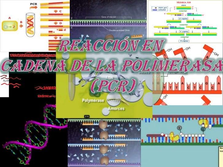  Se trata de una  técnica usada para  crear un gran número  de copias de un  segmento de ADN,  que utiliza ciclos de  des...