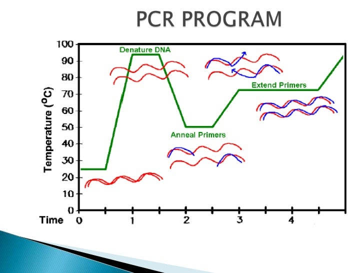    Prevent contamination in PCR with exogenous      DNA sequences.     Always run negative controls.     Use    sterili...