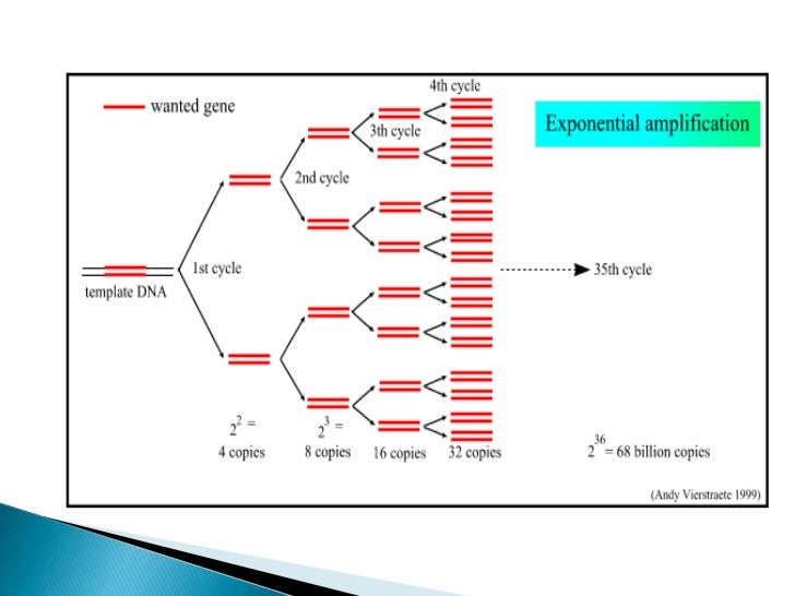For a standard Taq PCR reaction of 30 cycles , the reaction volumeof 25- 50 μl contains 1 pg – 1 μg of DNA 0.5 – 2.5 U of ...