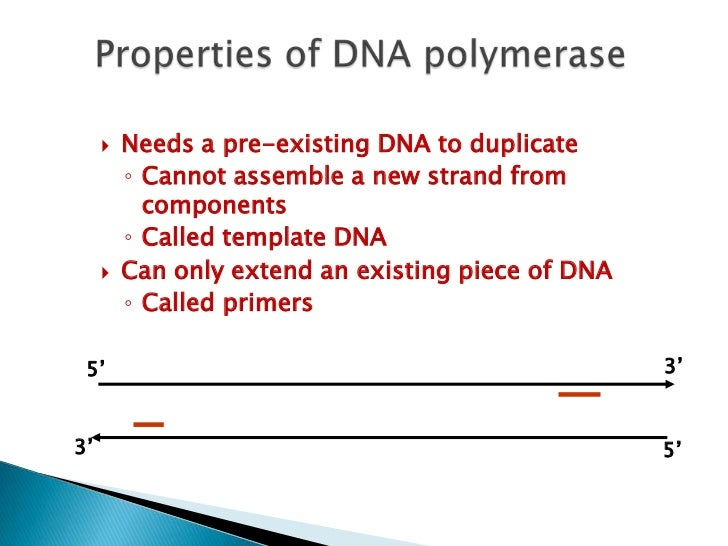    PCR uses the enzyme DNA polymerase that directs the    synthesis of DNA from deoxynucleotide substrates on a    single...