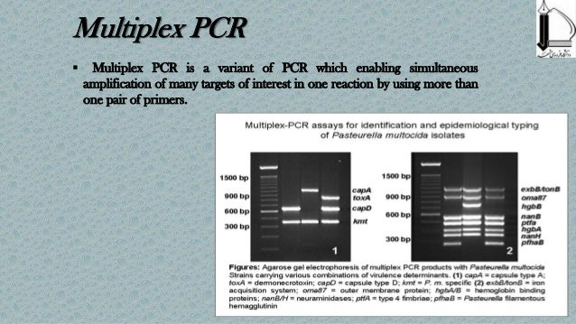 how to read pcr results
