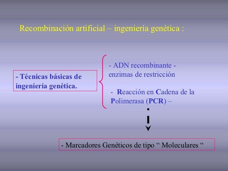 PCR MARCADORES MOLECULARES Slide 2