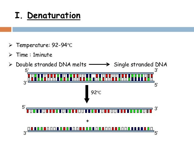 polymerase chain reaction problem solutions with Polymerase chain reaction problem solutions with assignment help polymerase chain reactions are the specific terms used in stating different compounds and sates of the carbon compound which are specially used in a particular branch of chemistry called the organic chemistry.
