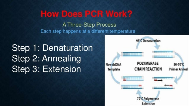PCR Introduction