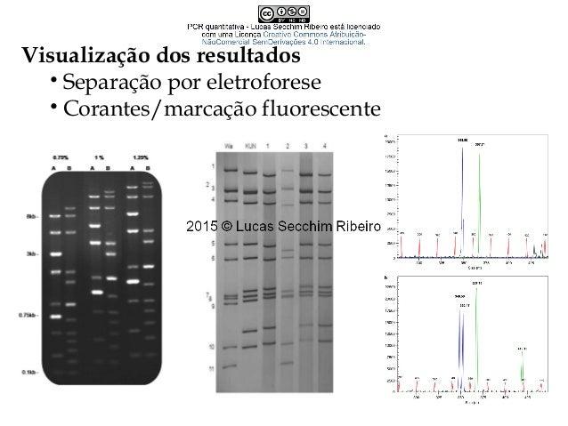 Características de bons primers • Tamanho do fragmento a ser gerado • Tempo de extensão da polimerase •Especificidade  Pr...