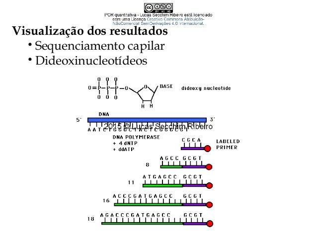 Características de maus primers • Inter-complementariedade • Formação de dímeros (primer dimer) • Atenção à extremidade 3´